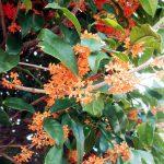 高島平団地の花